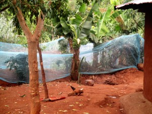 The Water Project:  Garden With Mosquito Net Fence