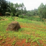 The Water Project: Mutambi Community, Kivumbi Spring -  Community Landscape