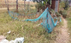 The Water Project:  Kitchen Garden With Mosquito Net Fence
