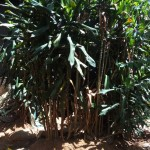 The Water Project: Murumba Community -  Bushes Where Open Defecation Is Practiced