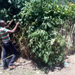 The Water Project: Handidi Community -  Alex Pruning A Fruit Tree