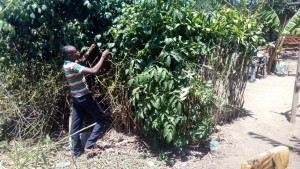 The Water Project : 10-kenya4725-alex-pruning-a-fruit-tree