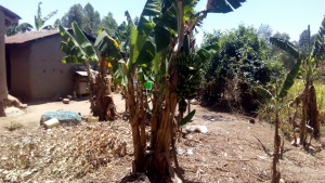 The Water Project : 11-kenya4725-banana-plantation