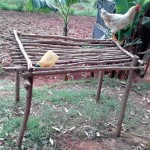The Water Project: Igogwa Community -  Chicken On Dish Rack
