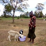 The Water Project: Bukhakunga Community -  Watering Her Sheep