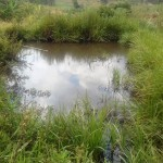 The Water Project: Emukhalari Primary School -  Students Often Use This Fish Pond To Fill Their Containers