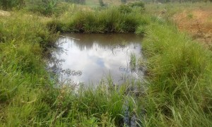 The Water Project:  Students Often Use This Fish Pond To Fill Their Containers