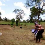 The Water Project: Bukhakunga Community -  Water Her Sheep