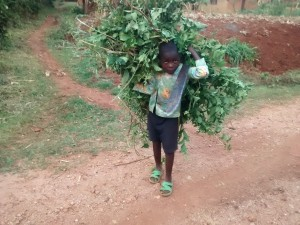 The Water Project:  Boy Helps His Mother To Feed Animals After School
