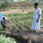 The Water Project: Shiamboko Community -  Rose A Wewasafo Staff Helps Community Clear Its Drainage Trench