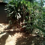 The Water Project: Irenji Community -  Bushes Used As Latrine