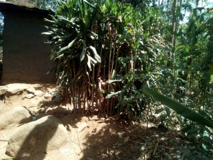The Water Project:  Bushes Used As Latrine