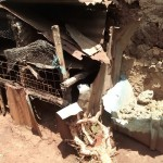 The Water Project: Wamuhila Community -  Dog Kennel
