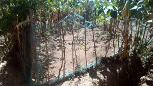 The Water Project:  Garden Fenced With Mosquito Net
