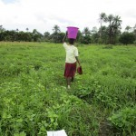 The Water Project : 4-sierraleone5132-swamp