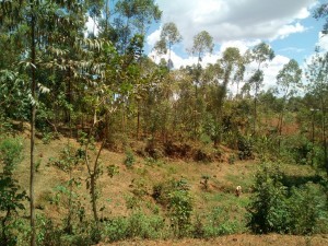 The Water Project : 5-kenya4744-community-landscape