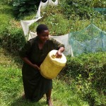 The Water Project: Bushevo Community -  Mrs Enani Lifts Liters Of Water