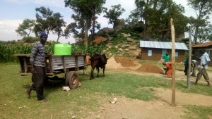 The Water Project:  Oxen Delivering Water For Construction