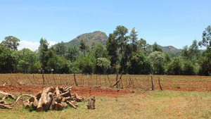 The Water Project : 9-kenya4804-farms