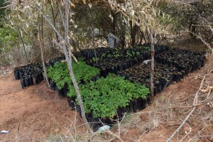 The Water Project:  Seedlings