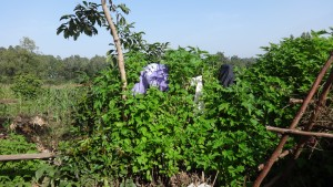 The Water Project:  Clothes Hanging On Bushes