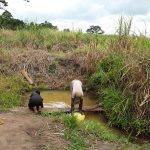 The Water Project: Rubani-Kyawalayi Community -  Fetching Water