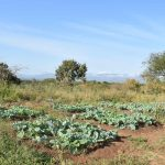 The Water Project: Kithaasyu Secondary School -  Farming Project
