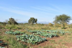 The Water Project:  Farming Project