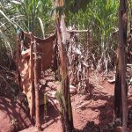 The Water Project: Maiha-Kayanja Community -  Latrine Example