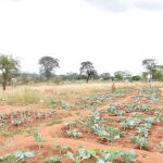 The Water Project: Ikaasu Secondary School -  School Garden