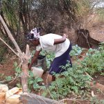 The Water Project: Karuli Community B -  Watering The Garden