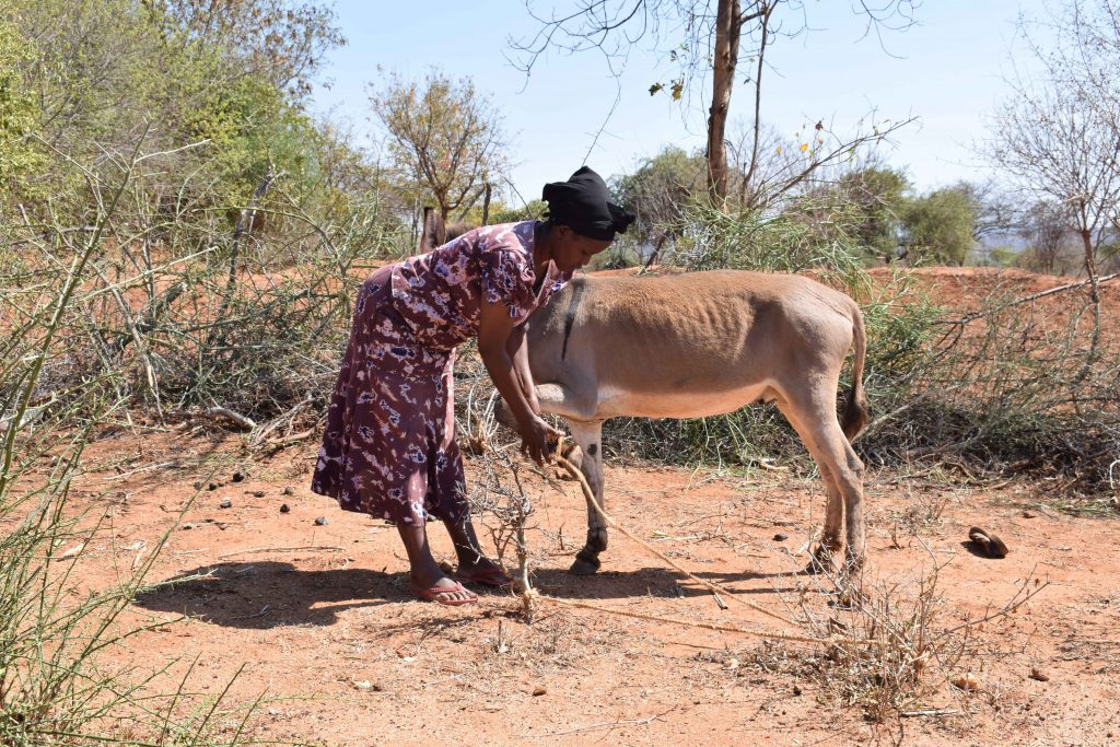 The Water Project : 9-kenya4860-donkey-that-carries-water