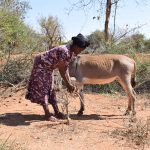 The Water Project: Katuluni Community -  Donkey That Carries Water