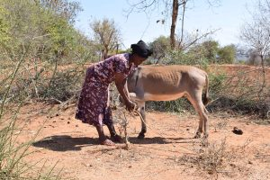 The Water Project:  Donkey That Carries Water