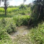 The Water Project: Rubona Kyagaitani Community -  Dirty Water Source