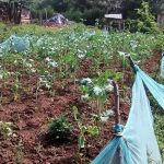 The Water Project : 10-kenya4843-farm-fenced-with-mosquito-net