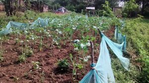 The Water Project:  Farm Fenced With Mosquito Net