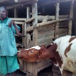 The Water Project: Ebusiratsi Special Primary School -  School Livestock