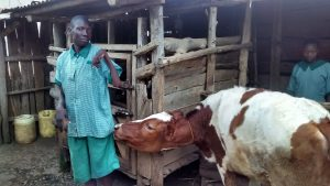 The Water Project:  School Livestock
