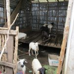 The Water Project : 17-sierraleone5134-animal-house