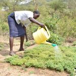 The Water Project: Kathama Community -  Tree Nursery