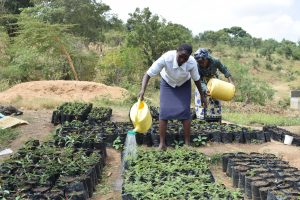 The Water Project:  Tree Nursery