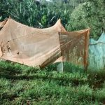 The Water Project: Lwenya Community, Warosi Spring -  Mosquito Nets Used Around Garden
