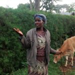 The Water Project: Lwenya Community, Warosi Spring -  Mrs Alugwiri Herding Her Cows