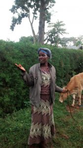 The Water Project:  Mrs Alugwiri Herding Her Cows
