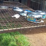 The Water Project: Mumias Complex Primary School -  Dish Rack