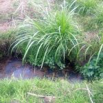 The Water Project: Musango Community, Dawi Spring -  Current Water Source