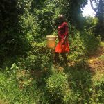 The Water Project: Ataku Community -  Marion Walking To Current Source
