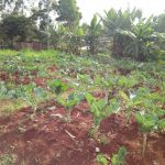 The Water Project: El'longo Secondary School -  School Farm