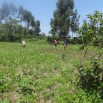 The Water Project: Shitungu Community E -  Community Members Working On A Farm